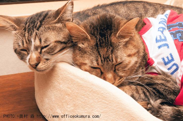 nemu_cats